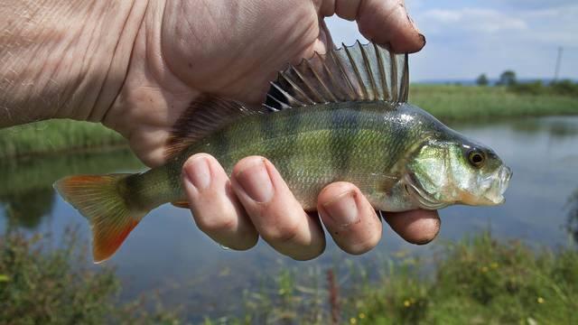 pêche en Sud Vienne Poitou