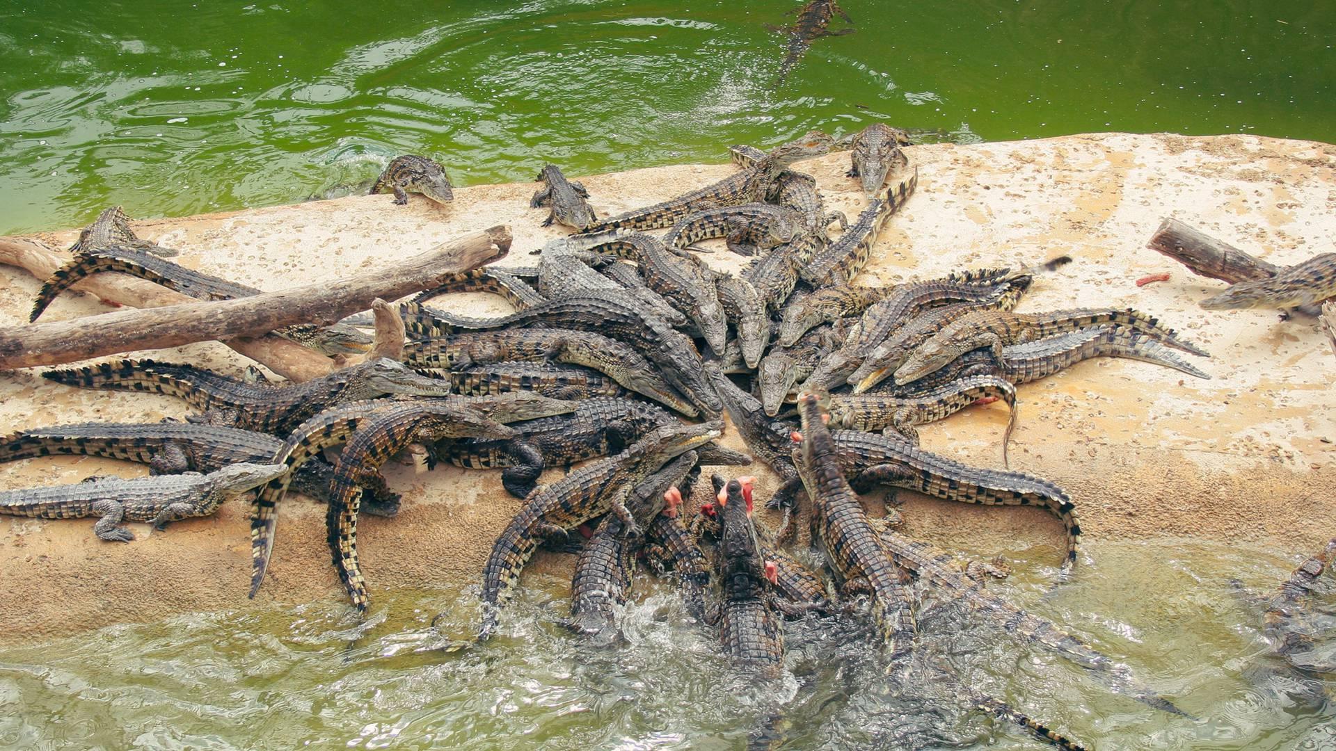 Planète Crocodiles in Sud-Vienne-Poitou